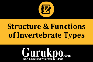 Structure & Functions of Invertebrate Types (Only Study Material)